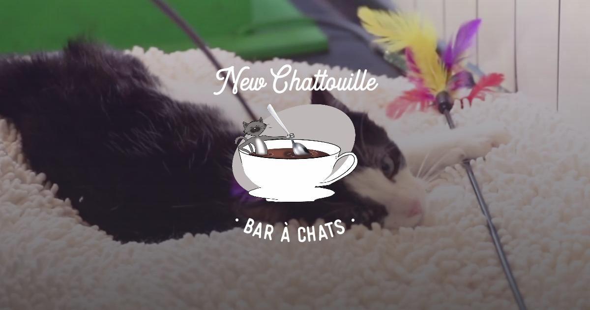 Le New Chattouille